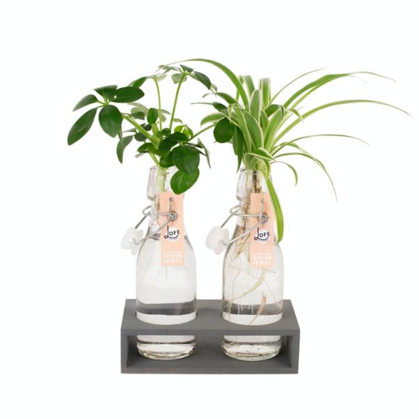 Twee hydroponie plantjes