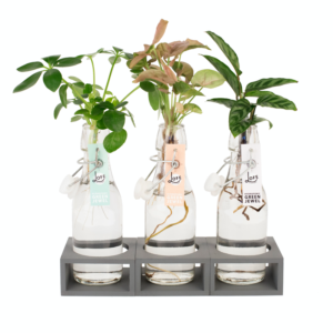 drie plantjes in water
