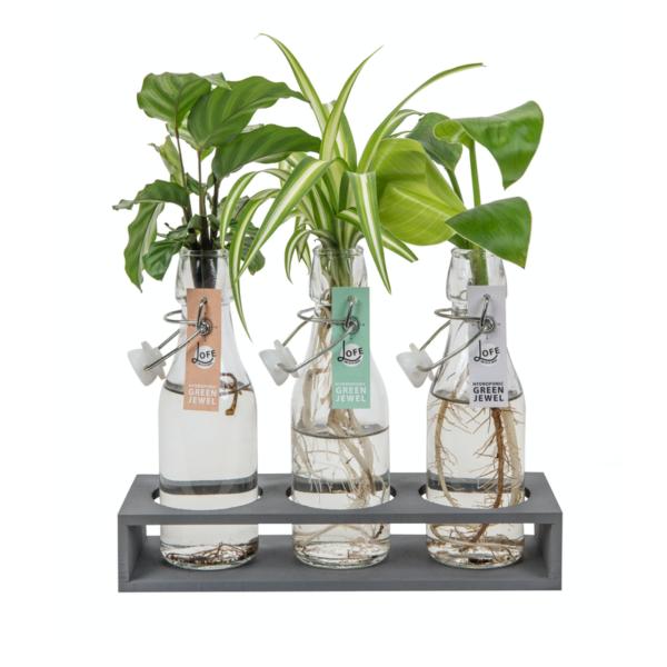 drie hydroponie plantjes