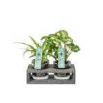 Duo plantjes in een houder