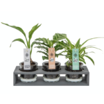 plantjes in pot