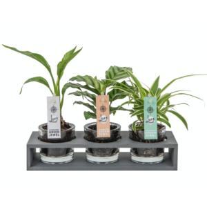 plantjes in glazen pot