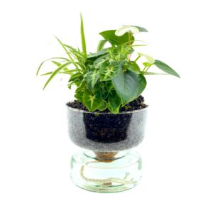 planten in glazen schaal
