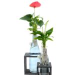 planten in gekleurd gals