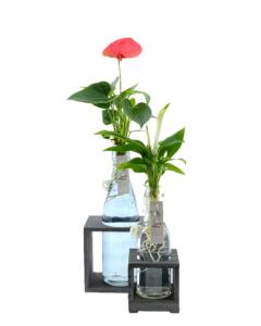 planten in gekleurd glas