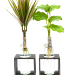 hydroponie planten