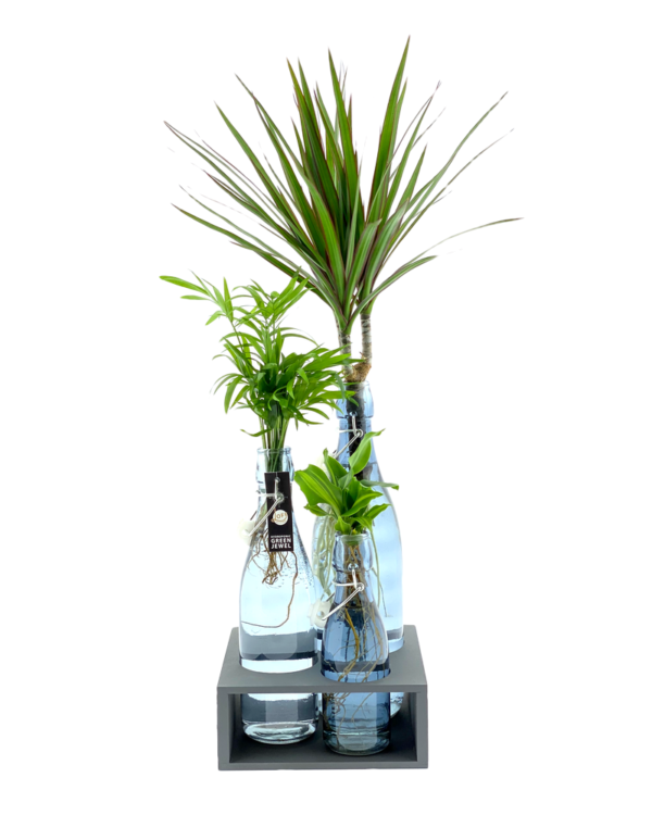 plantjes in gekleurd glas