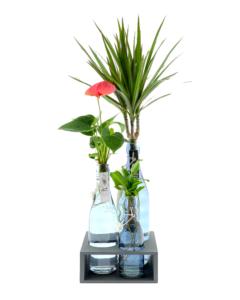 Tafelplantjes