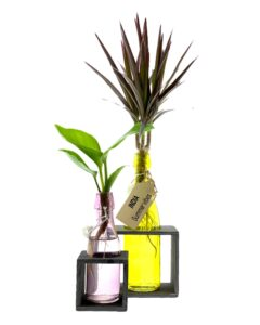 Indische plantjes in fles